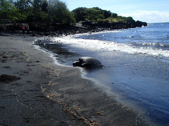 Hawaii Pack and Paddle Day Tours: Black Sand beach