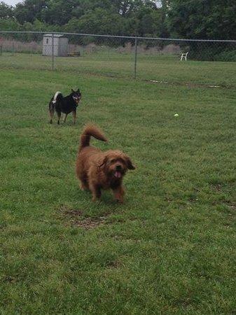 Dog Wood Park: small dog area