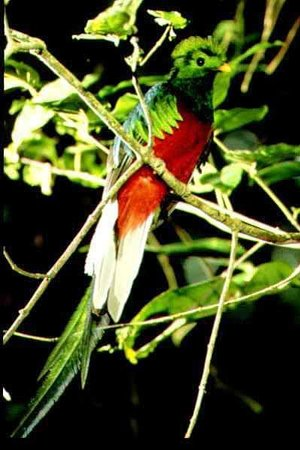 Casa Balbi: Male Quetzal