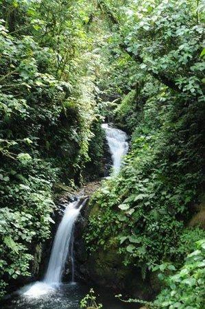 Casa Balbi: Monteverde Cloud forest Reserve