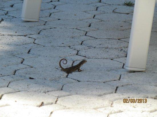 Winterset Hotel: a cute lizard friend!