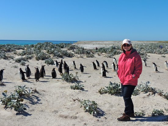 East Falkland, Falkland Islands: Jean and a few Gentoo Penguins
