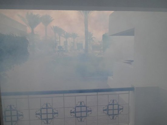 Viva Sharm Hotel: Pestizide überall