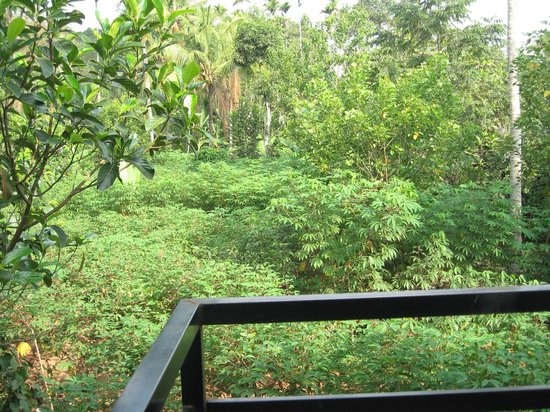 Periyar Villa Home Stay, Thekkady: View from the balcony