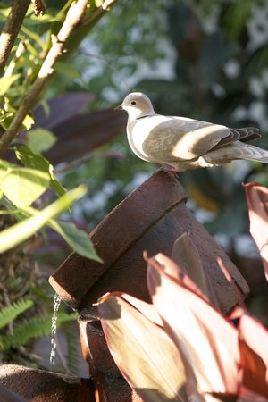Key West Harbor Inn: Bird enjoying a drink in the fountain and shade in the garden area.