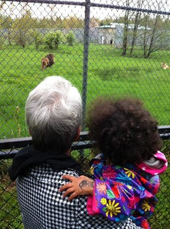 Greater Vancouver Zoo: lion sighting.