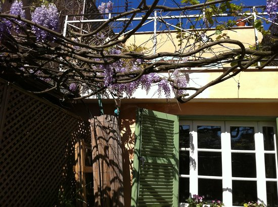 Residenza Arco dei Tolomei: Wisteria blooming on the patio off the dining room