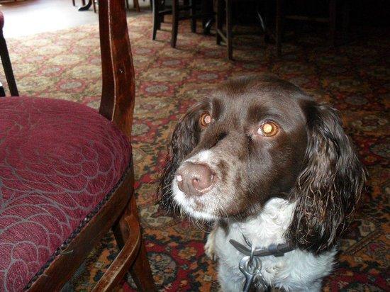 The Grove: Daisie enjoying the pubs facilities
