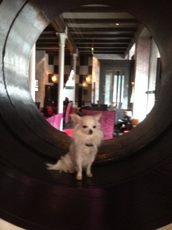 Louis loving his stay at Malmaison Belfast