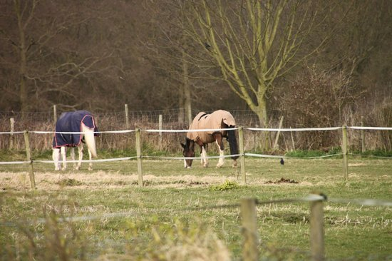 Highfields Farm Bed & Breakfast: Horses at Highfields Farm
