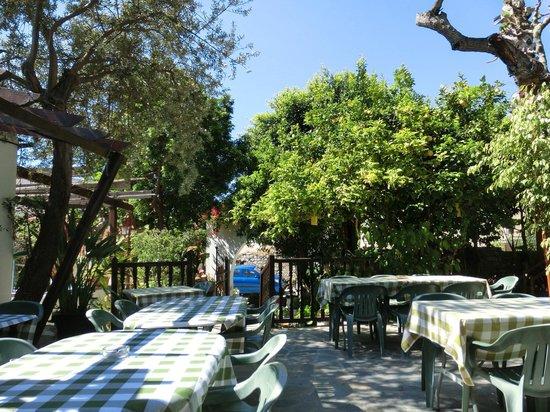 Bunch of Grapes Inn Hotel : Courtyard