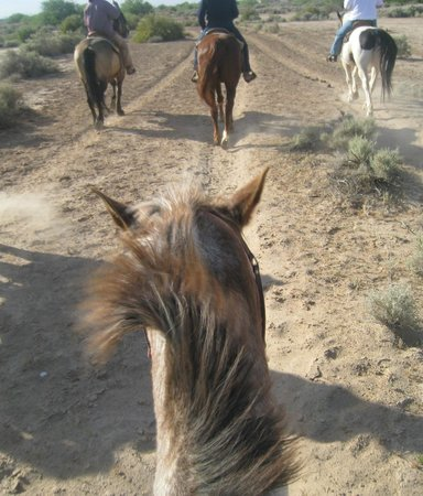 KOLI Equestrian Center: Great desert experience!