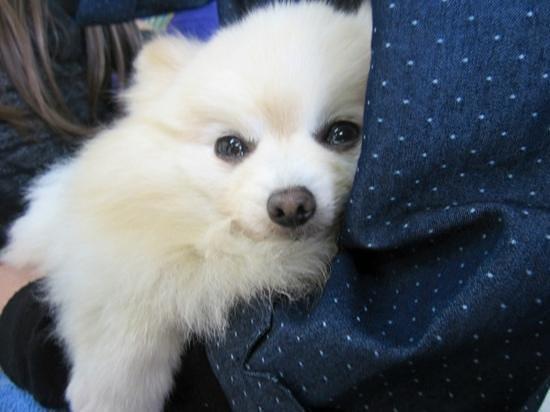 Cuddly Dominion: かわいいイヌたちとも触れ合えます