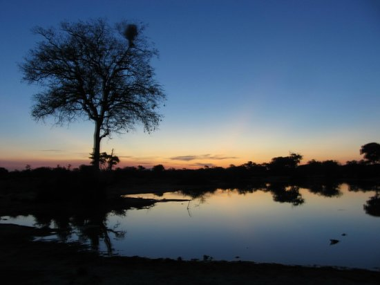 Umlani Bushcamp: Sunset at the water hole
