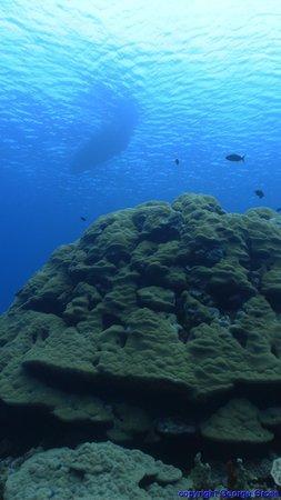 Kosrae Nautilus Resort: Diving