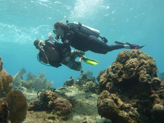 Cha Cha Cha Dive Shop: Slowly heading deeper
