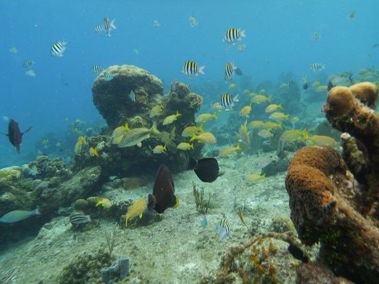 Cha Cha Cha Dive Shop: Paradise reef