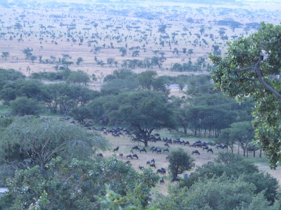 Serengeti Pioneer Camp: wildbeasts that moved in at night