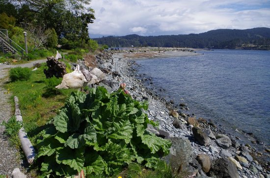 Sooke Harbour House Resort Hotel: Whiffen Spit from Sooke Harbour House