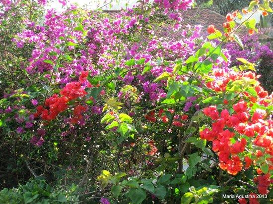 La Boheme Hotel e Apart Hotel: jardines increíbles