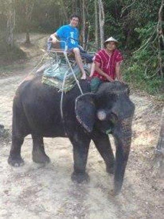 Siam Safari: Gavan on the rogue elephant :)