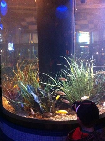 Legal Sea Foods : their fish tank