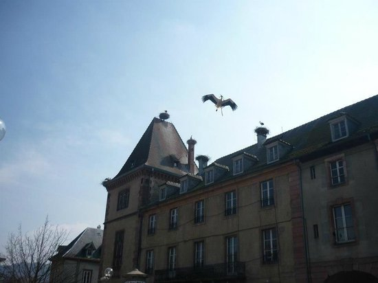 Storks building their nests on the rooftops of Munster