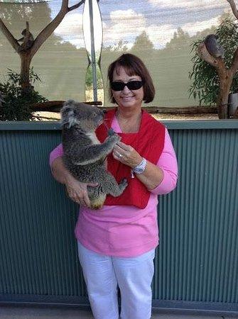 Cohunu Koala Park: Koala cuddling at Cohuna Koala Park
