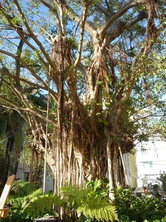 Freehand Miami: árbol en la zona de la piscina