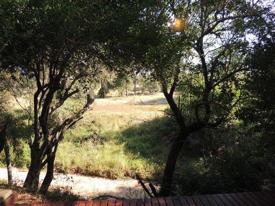Serondella Game Lodge: Waterhole view from my room