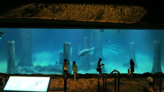 how to go to river safari singapore