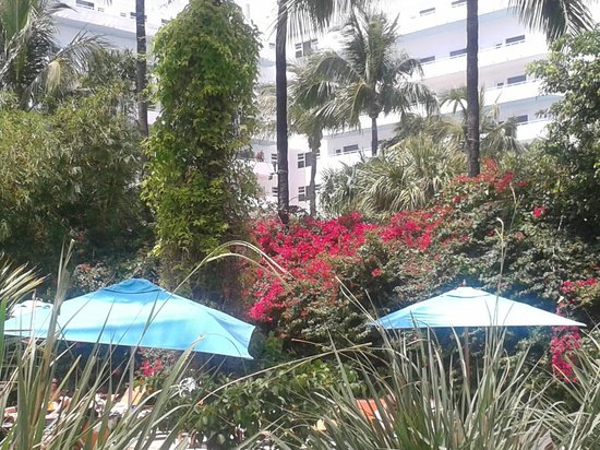 The Palms Hotel & Spa: Another view
