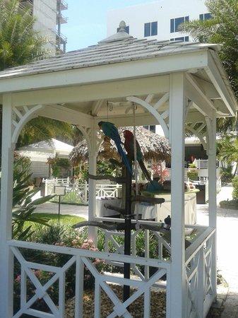 The Palms Hotel & Spa: Birds