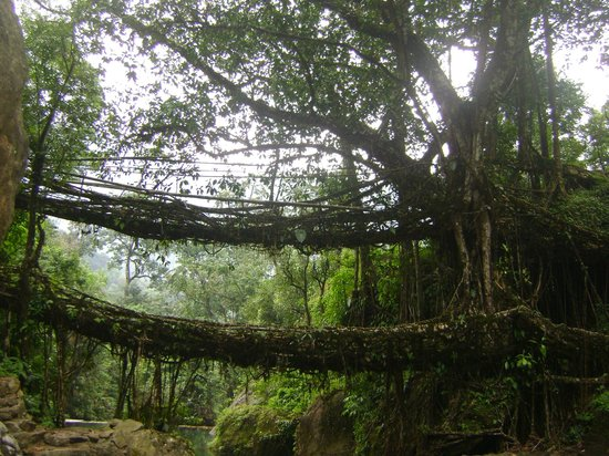 Double Decker Living Root Bridge: The pristine of the natural creation