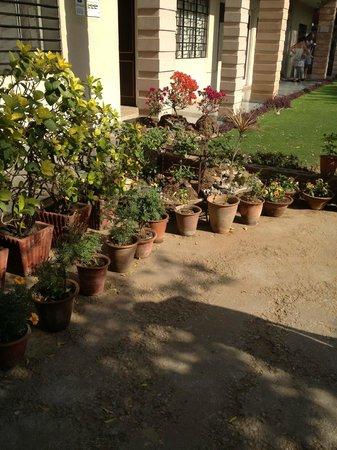 Jai Niwas: Garden