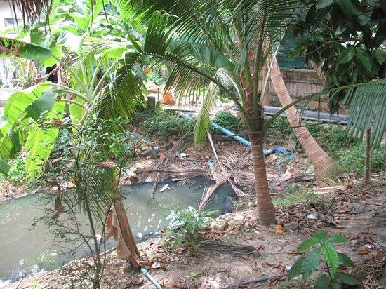 Nature Beach Resort Koh Chang : Sicht aus dem Zimmer- Müll und Abwasser