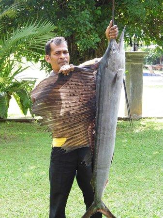 Amal Villa Apartments & Rooms: Schwertfisch fürs Abendessen