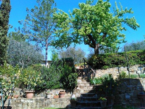 A Casa di Olivo: Giardino