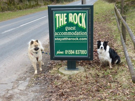The Rock B&B : our dogs enjoyed their stay too!