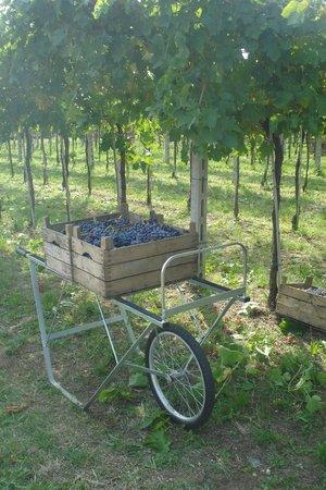 San Rustico Winery