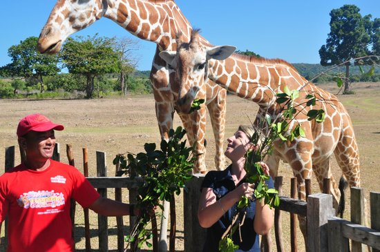Cashew Grove Beach Resort : Safari Park