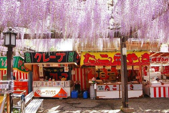 Japanese Wisteria of Kurogi: このように藤とともに出店も並んでいます。