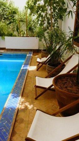 Riad l'Orangeraie: Our pool