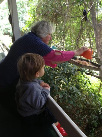 Kingfisher Country House: Sue feeding wild birds with Ethan