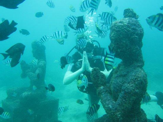 COOEE Bali Reef Resort: Дайвинг