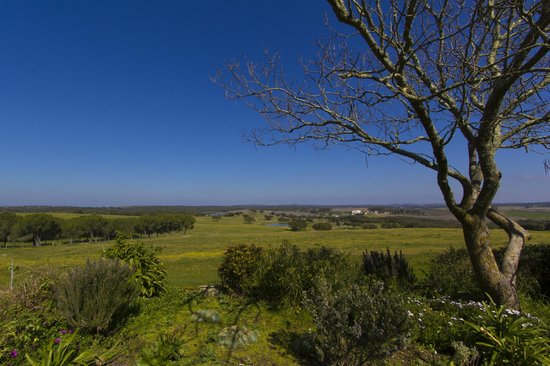 Herdade Outeiro de Esquila : View from backyard - both homes