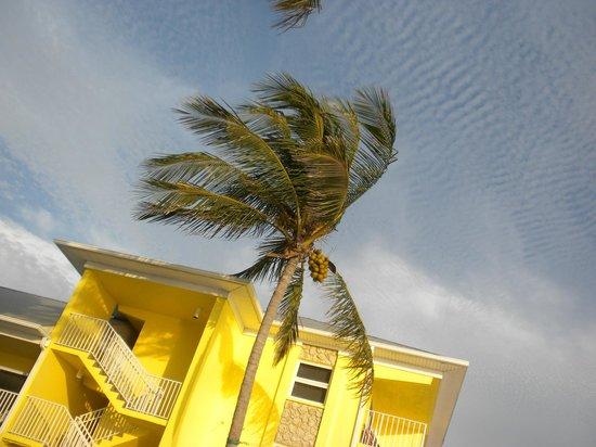 Sandpiper Gulf Resort : View from the beach