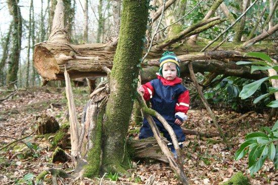 Rosecraddoc Manor: Exploring Woods again