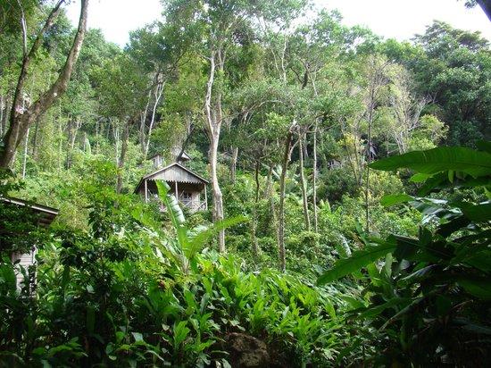 Jungle Bay, Dominica: Holzhäuser auf Stelzen