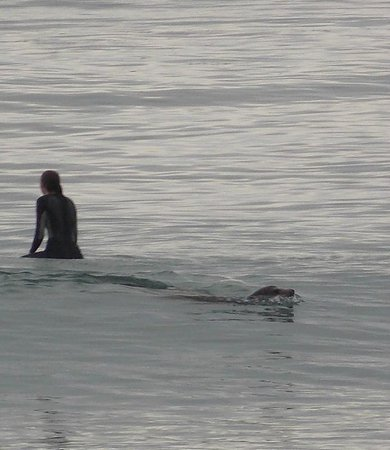 Point Mugu State Park: Seal passing a swimmer